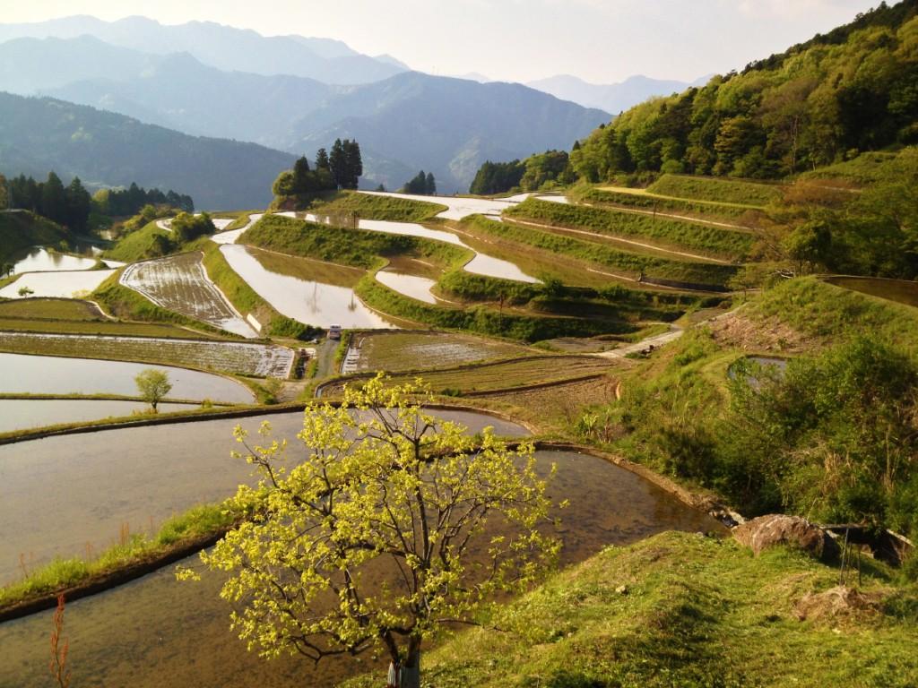 rice_terrace_20140108_1